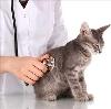 Ветеринарные клиники в Городищах